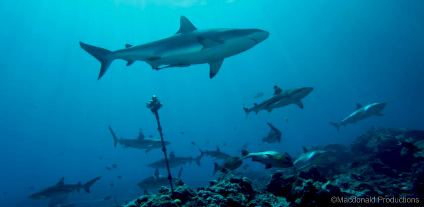 For the love of Sharks! Its like Google Street View but underwater!