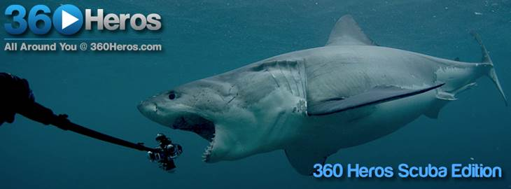 Shark Attack: Pulling Success (and a $5,000 Reward) From the Jaws of Failure